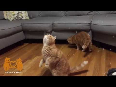 Adorable Cats Discover Bubbles