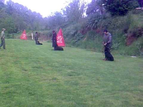 I nostri allievi a quattro zampe durante un esercizio di terra libero