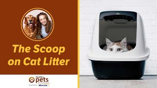 The Scoop on Cat Litter