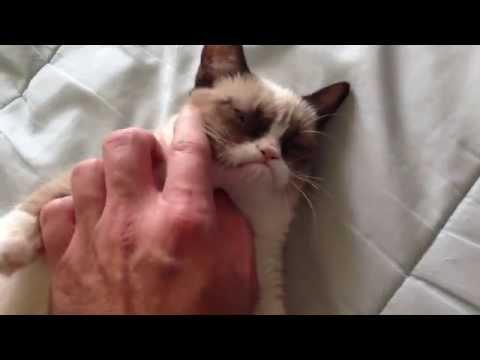 天生結屎面,就算再開心也是結屎面的貓咪!