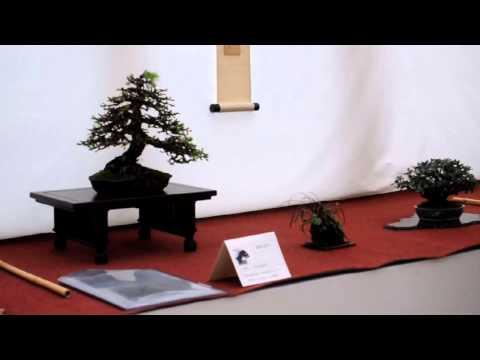 British Shohin Association Exhibition 2014 Part 1 - Peter Warren Exhibit Critique