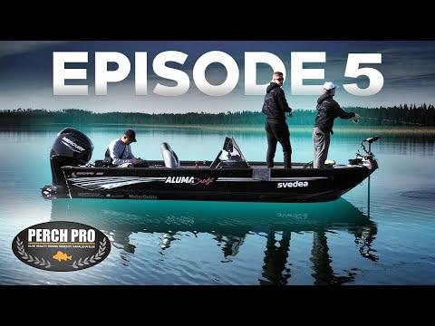 PERCH PRO 7 - Episode 5