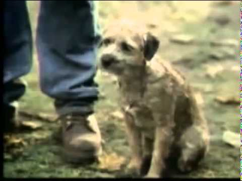 budweiser commercial – trained dog