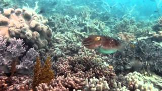 Lizard Island Australia  city photos gallery : The Great Barrier Reef - Lizard Island, Australia
