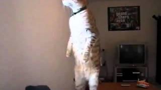 Много напушена котка!!! Смях!!!