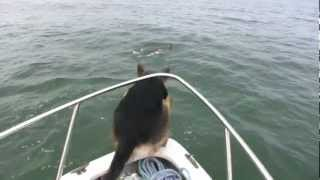 A Dog Wants To Play With Dolphins