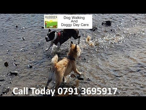 Dog Day Care Near Me Uk