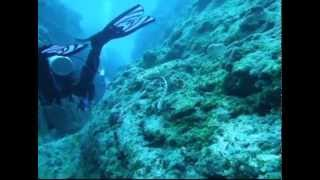 Diving in the pristine waters of Niue Island with Sea Snakes, Whales and Dolphins.