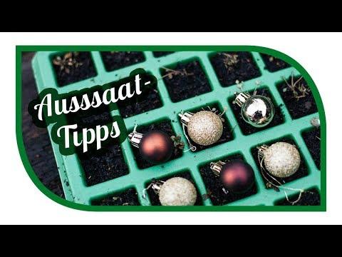 Aussaat Tipps für Dezember 🌱 Microgreens with Timelapse 🍠 Süßkartoffeln auf der Fensterbank (видео)