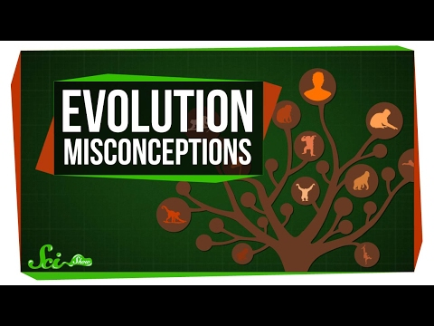 Common Myths About Evolution Dispelled