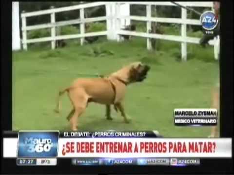 4 Perros atacan y matan a delincuente en Glew