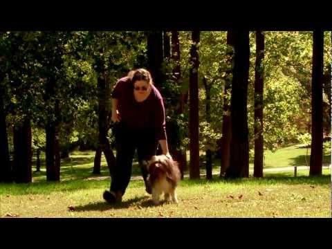 DIVISORIA FOR PETS! Murang Pet Supplies! - Thời lượng: 13 phút.