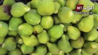 """مستغانم : إنتاج وافر لفاكهة """"الباكور"""" و إقبال كبير للمواطنين على شرائه"""