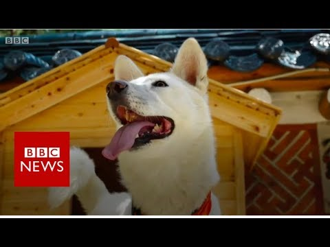 Kim Jong-un's gift of dogs and other signs of friendship - BBC News