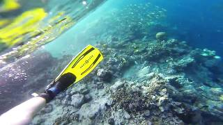GoPro: Snorkeling / Free Diving - Solomon Island. Fish, coral and even a shark! Clear blue water. diving off Uepi Island in the...