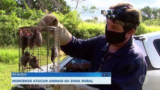 Três casos de raiva foram registrados em animais de Ocauçu