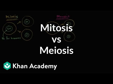 comparing mitosis and meiosis video  khan academy