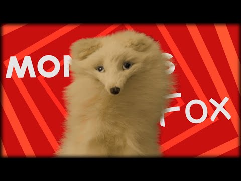 Vacuuming - Mondays with Mr.Fox