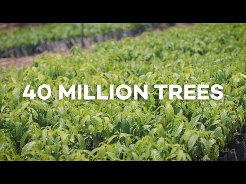 40 Million Trees Planted with Ecosia