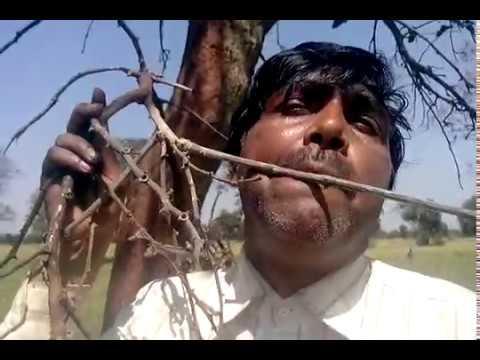 Video Khushi ki woh raat aa gayi VIJAY MISHRA 09630804142 download in MP3, 3GP, MP4, WEBM, AVI, FLV January 2017