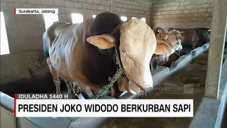 Video Ini Dia Penampakan Sapi-Sapi Kurban Milik Presiden Jokowi MP3, 3GP, MP4, WEBM, AVI, FLV Agustus 2019