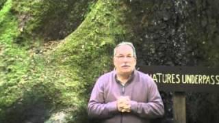 #271 Redloves und Redwoods (USA, 2010)