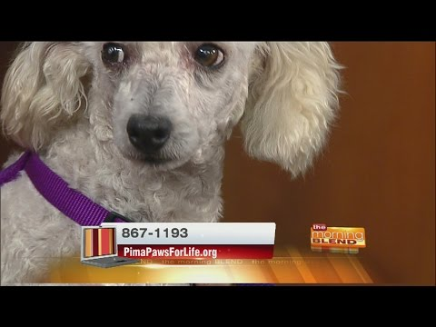 Pima Paws For Life - Adoptable animals and upcoming events