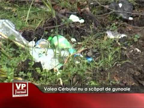 Valea Cerbului nu a scăpat de gunoaie