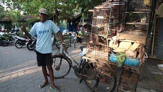 Download Video DUNIA HOBI : Mengharukan! Penjual Burung Sepeda Ontelan Dari Wonosari Di Pasar Pasty MP3 3GP MP4