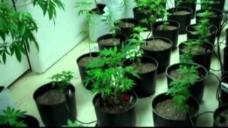 420GS Gardener YouTube video