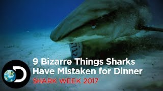 Ever wondered what ends up in a shark's stomach, aside from fish? Now you know… Don't miss #SharkWeek from 24 – 28 July,...
