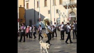 Galatina Italy  city pictures gallery : ITALIAN DOGS IN PARADE:Galatina, Italy