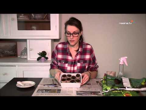 DIY Anzuchtset - Tipps & Tricks