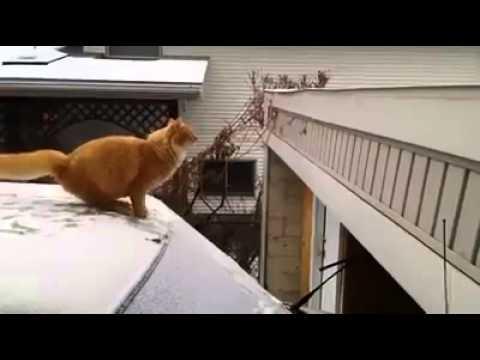 Gattino tenta di saltare…