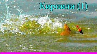 Ловля КАРПА на поплавочную удочку.Речка Кирпили(1)