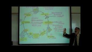 RENIN-ANGIOTENSIN-ALDOSTERONE REFLEX By Professor Fink.wmv