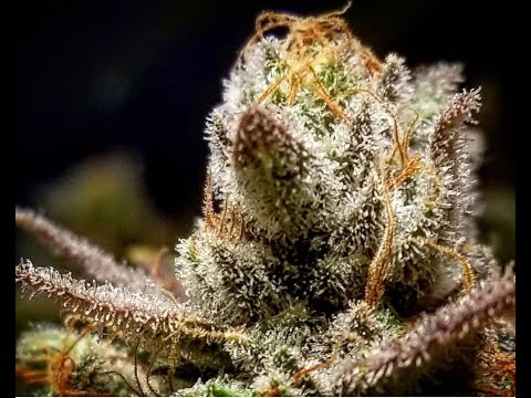 Season 6 Ep 2 How to Grow Indoor Cannabis