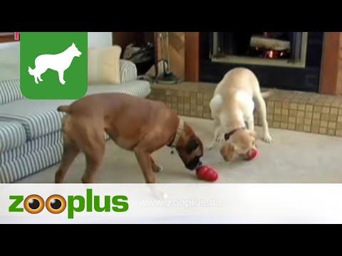 Kong Hundespielzeug