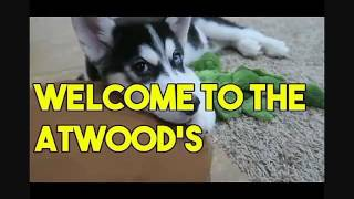 Welcome to the Atwoods  (Dum Dee Dum by keys N krates )