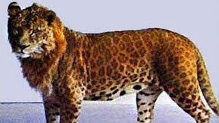 Video 7 of the World's Most Dangerous Hybrid Animals MP3, 3GP, MP4, WEBM, AVI, FLV Januari 2019