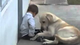 Sweet Mama Dog Interacting with a Beautiful Child with Down Syndrome