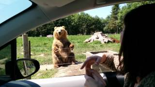 Video Awesome catch by the bear MP3, 3GP, MP4, WEBM, AVI, FLV Oktober 2017