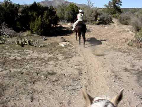horseback riding near Anza (pinyon flats) california