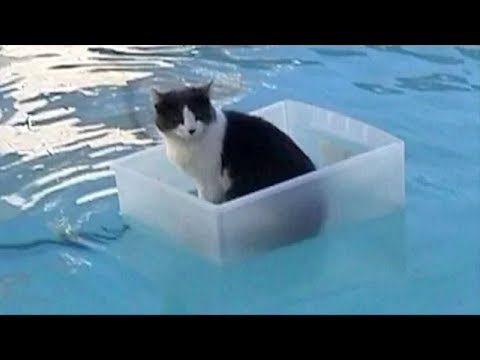 Funny cat videos - Cats Hate Water! Funny Cats in Water Compilation 2019