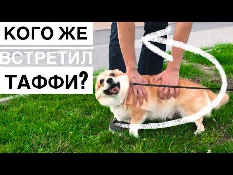 😱Что будет с озвучкой Кого встретил Таффи😀 ВЛОГ - DomaVideo.Ru