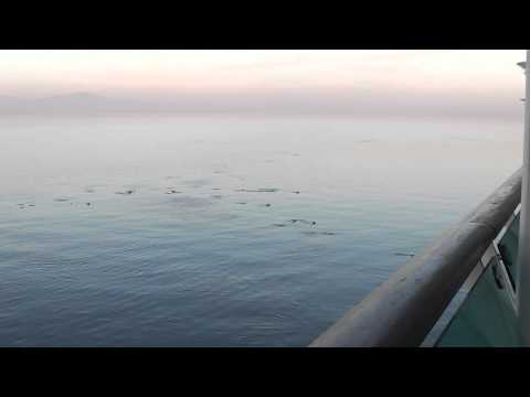 Dolphins Seen from Deck