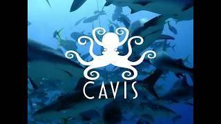 Fun Action Video For Cavis Brand Apparel