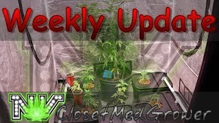 Weekly Update 12/7/2017 by  NVClosetMedGrower