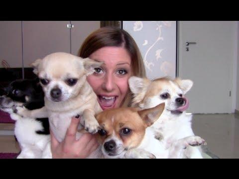 Haustier - Mein Video alles rund um meine Hunde http://www.youtube.com/watch?v=9KtR8IEyWbM BITTE schaut euch diese Info's zu unseriösen
