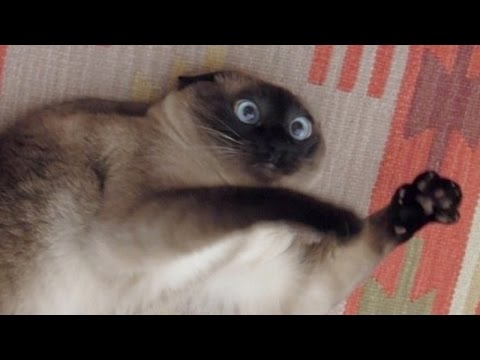 Cats just never fail to make us laugh - Funny cat compilation (видео)